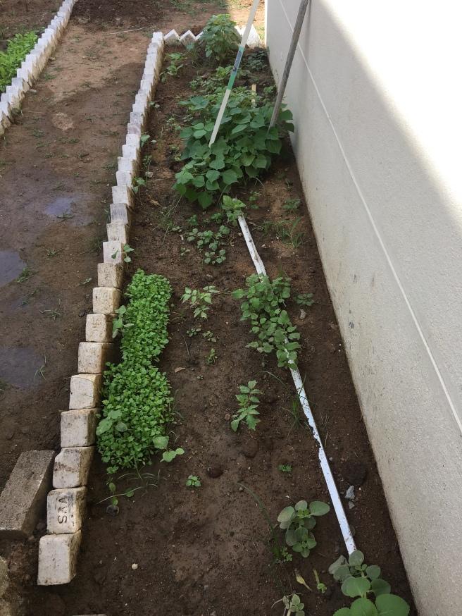 Coriander, Spinach & Ladies Finger!!