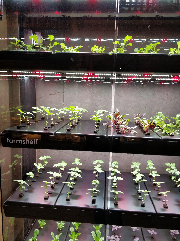 Shelf to grow Saplings!!!